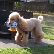 Montík dostal od Milči novou hračku