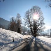 Sluníčko schované za stromem