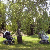 schrupli jsme si pod stromem
