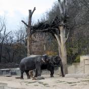 Od slonů jsem se nechtěl odtrhnout