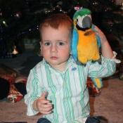 Správný pirát má i svého papouška