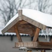 I ptáčkové mají zimu.