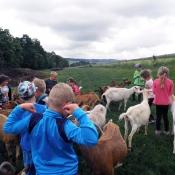 Kozí farmy